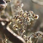 Herbst Gold von cuprum