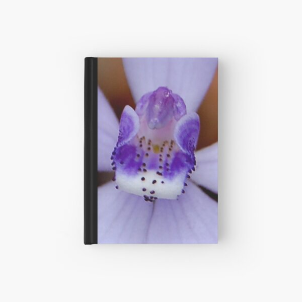 Silky Blue Orchid Cyanicula sericea  Hardcover Journal