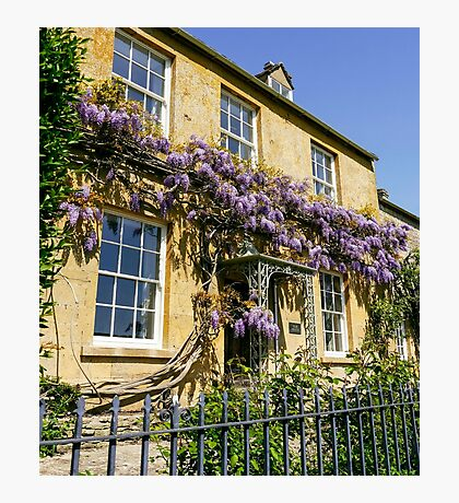 Cotswold Wisteria Photographic Print