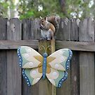 The Squirrel and Butterfly by MichelleR