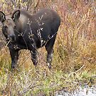 Young Moose by Betsy  Seeton