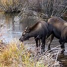 Momma Moose and Her Baby by Betsy  Seeton