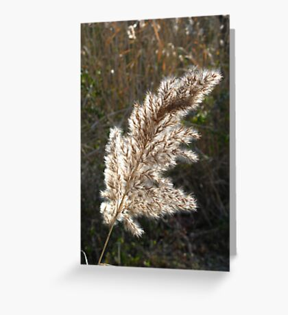 Grass Seed Feather Greeting Card