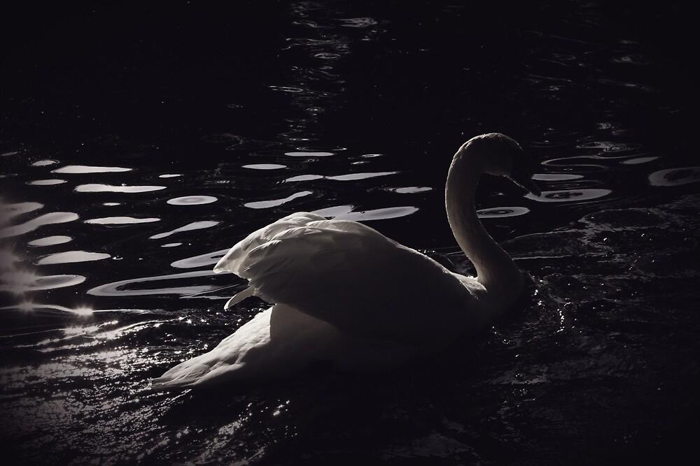 Pretty Swan Photograph by ikneadyoucas