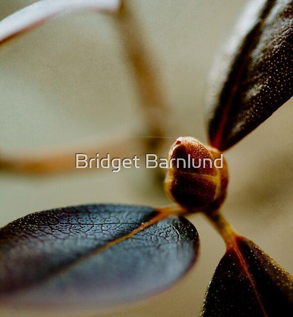 Untitled by Bridget Barnlund
