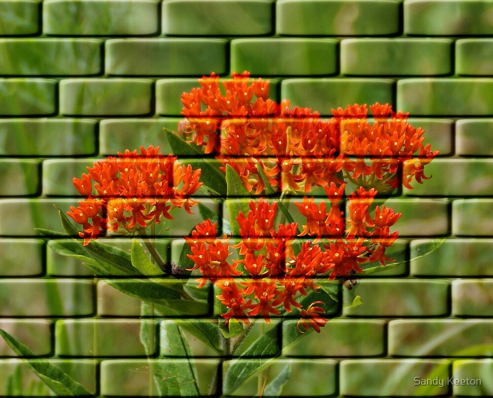 Orange Flowers by Sandy Keeton