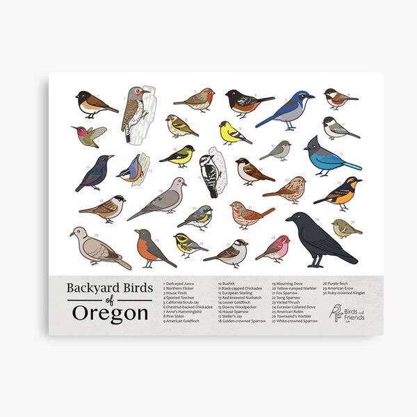 Oregon - Backyard Birds of Oregon Field Guide Print - Bird Art Print - BirdsandFriends.co Canvas Print