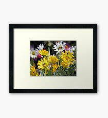 *SPRING DAISIES* Framed Print