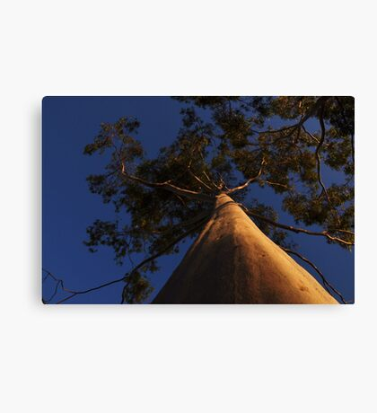 tree in the sunset Canvas Print