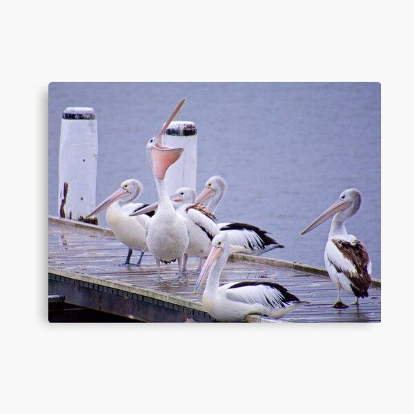 MARINE BIRD ~ Australian Pelican QMRYXB4X by David Irwin ~ WO Canvas Print