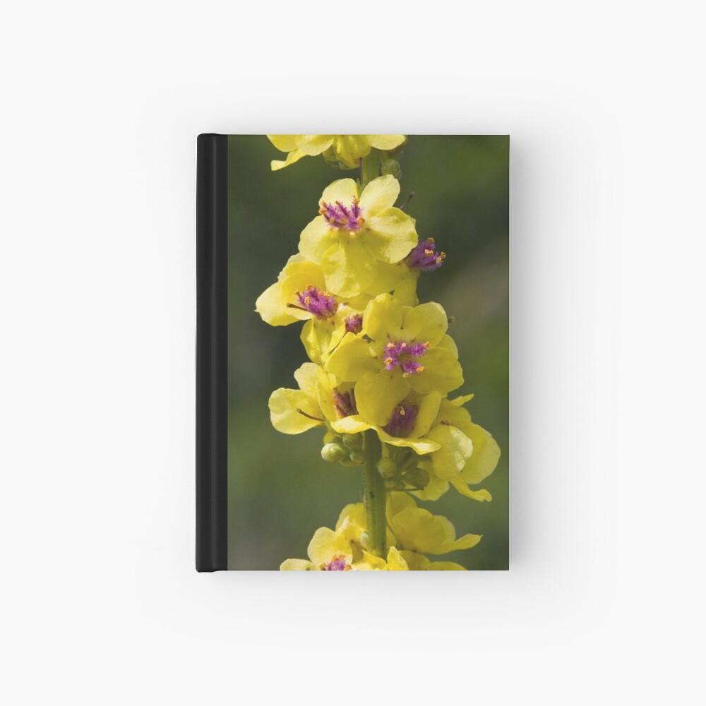 Dark Mullein (Verbascum nigrum) Hardcover Journal