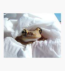 Froggy in a Blanket 2 - Frogs in Florida Fotodruck