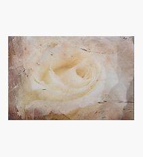 Grunge Rose Photographic Print