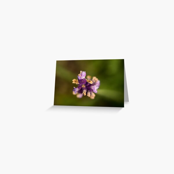 Purple Fuzzy Florals Greeting Card