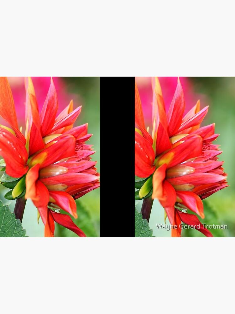 Colourburst by redmoondragon