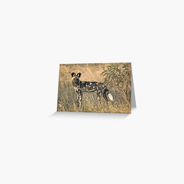 Afrikanischer Wildhund Grußkarte