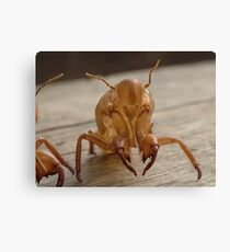 Insect exoskeleton Canvas Print