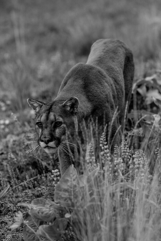 Mountain Lion Stocking by Matthew Kochel JJ In A Jayco