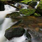 Fresh Gippsland Greens by Robert Mullner