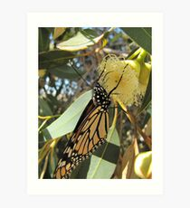 MONARCH IN HEAVEN! now gum flowers opening. Art Print