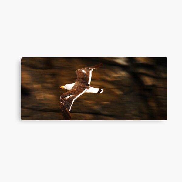 Albatross. Kangaroo Island. Canvas Print