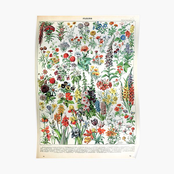 Adolphe Millot - Fleurs A - French vintage poster Poster