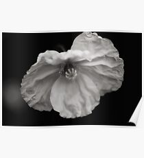 Poppy in Black and White Poster