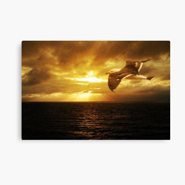 Dawn, Cape Du Couedic. K.I. Canvas Print