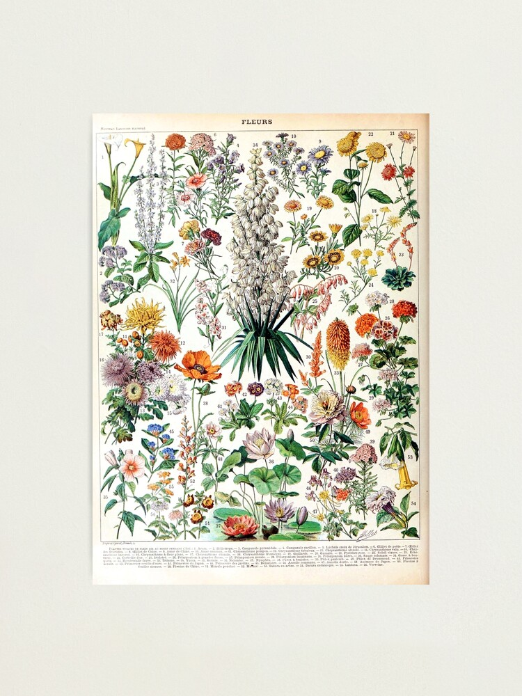 Alternate view of Adolphe Millot - Fleurs B - French vintage poster Photographic Print