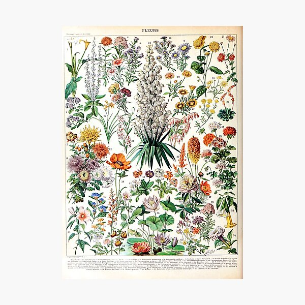 Adolphe Millot - Fleurs B - French vintage poster Photographic Print