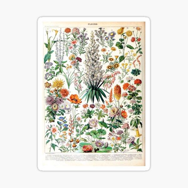 Adolphe Millot - Fleurs B - French vintage poster Sticker