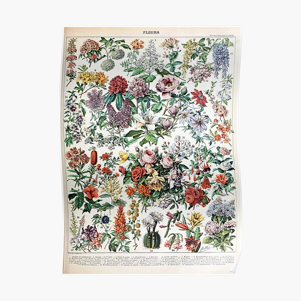 Adolphe Millot - Fleurs C - French vintage poster Poster
