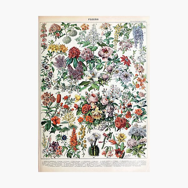 Adolphe Millot - Fleurs C - French vintage poster Photographic Print
