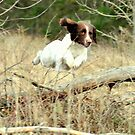 springer's in the air by Alan Mattison