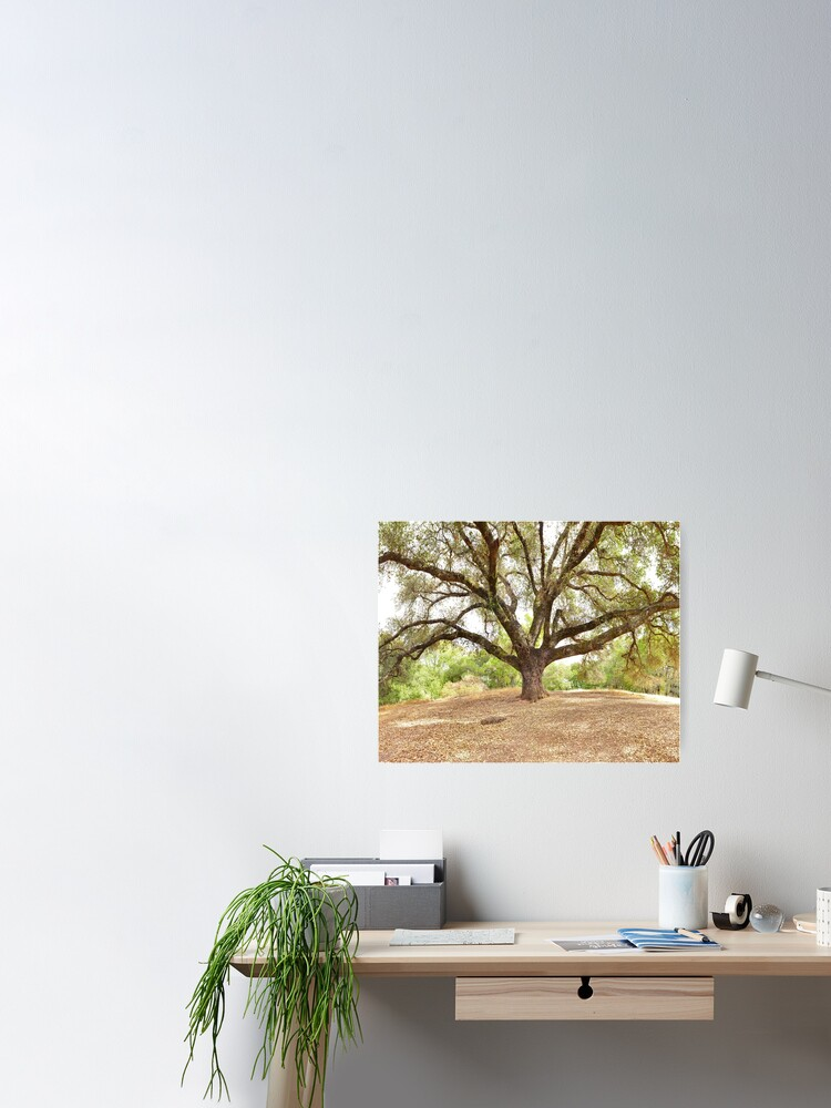 Alternate view of Old Oak Tree Poster