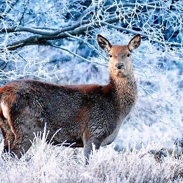 Winter Deer by Passie