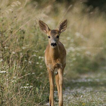 Deer by Passie