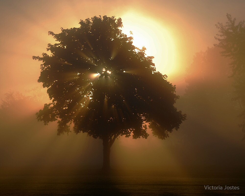 Sunburst by Victoria Jostes