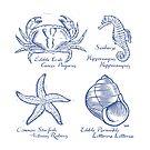 Sea Creatures by wonder-webb