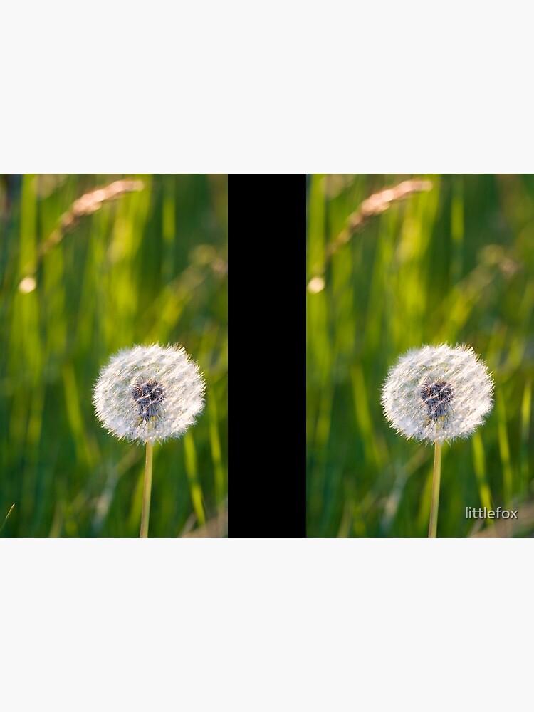 The lone dandelion by littlefox