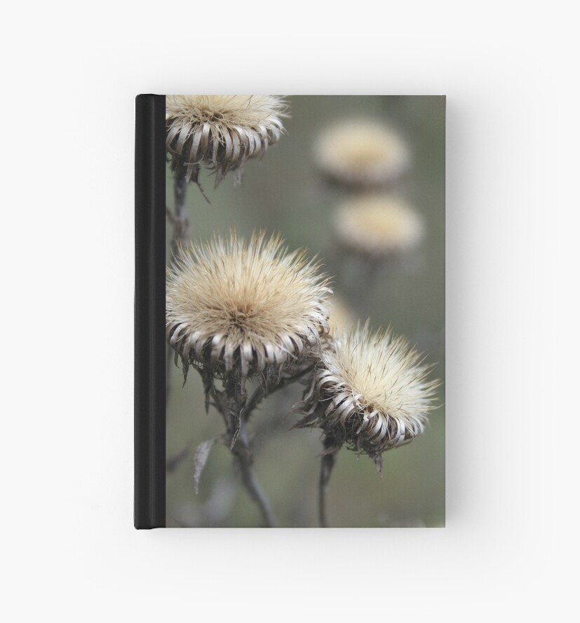 Trio ( from wild flowers collection)  by Antanas