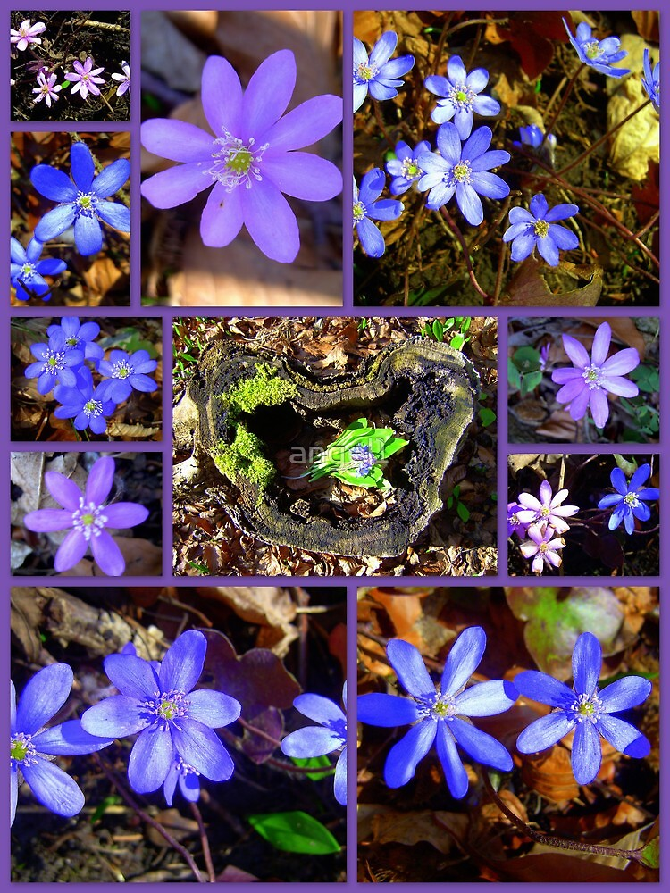 Hepatica Collection by ©The Creative  Minds