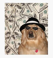 Rich Dog, Doggo #3 Photographic Print