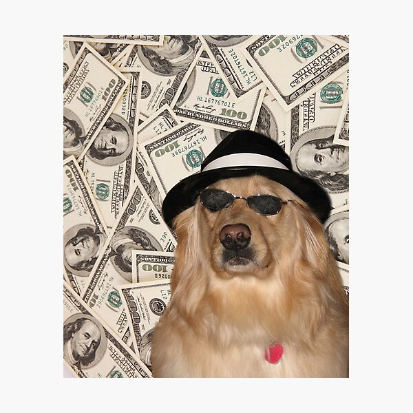Rich Dog, Doggo #3 Photographic Print