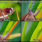 Butterfly... Let there be Life by bygeorge