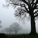 Trees in the Mist by mikebov