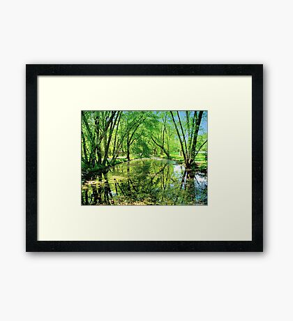 Reflections of a Summer Day  Framed Print