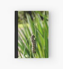 Monarch Caterpillar - 20 Hardcover Journal