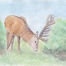 Deer by Linda Ursin