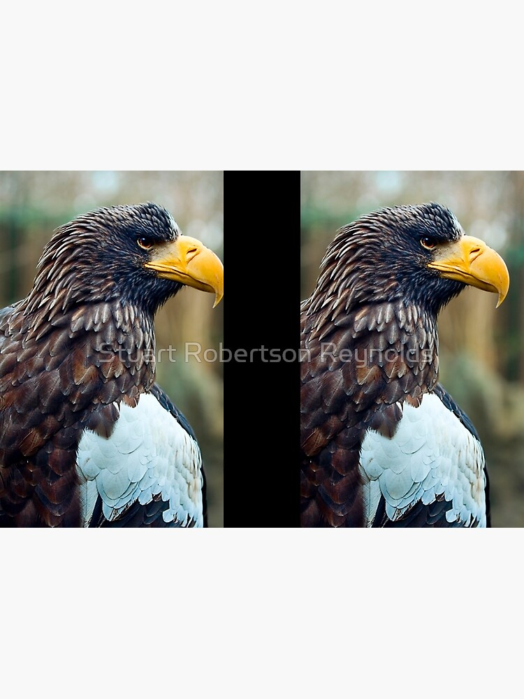 Steller's Sea Eagle by Sparky2000